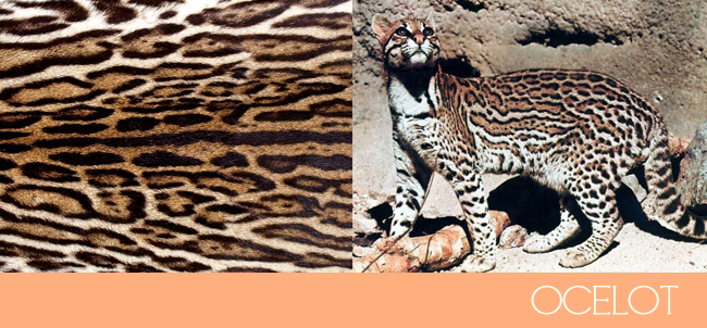 bf252d3659d1 The ocelot print is another pattern that is commonly used but not  referenced as such because it is not a commonly known animal.