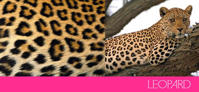 leopard-spots