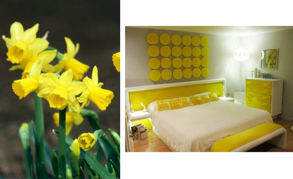 DH-Groundhog-Day-spring-flower-daffodil-yellow-bedroom