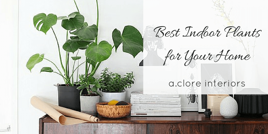 Best indoor plants for your home a clore interiors - Popular indoor plants ...